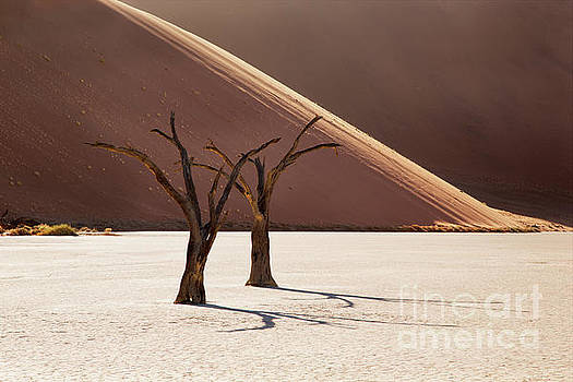 Deadvlei Trees by Richard Garvey-Williams