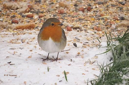Dear Little Robin by B Vesseur