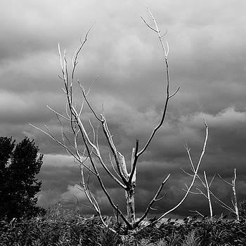 Death among Life by J Austin