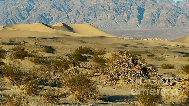 Gregory Dyer - Death Valley Mesquite Flat Sand Dunes