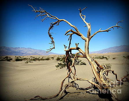 Death Valley Sand Dunes by Joy Patzner