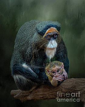 DeBrazza's monkey and baby by Brian Tarr