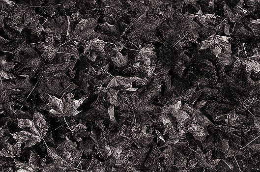 Decayed Autumn leaves on the ground Copper tone by Ricardo Dominguez