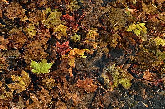 Decayed Autumn leaves on the ground by Ricardo Dominguez