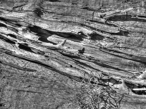 Decayed Wood by Phil Penne