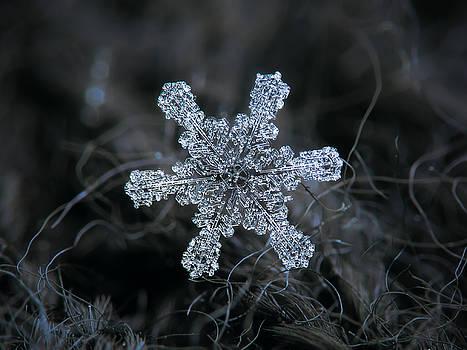 December 18 2015 - snowflake 1 by Alexey Kljatov