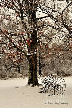 December Morning by Diane E Berry