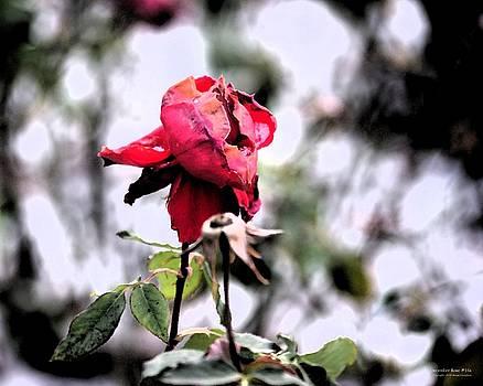 Brian Gryphon - December Rose #16
