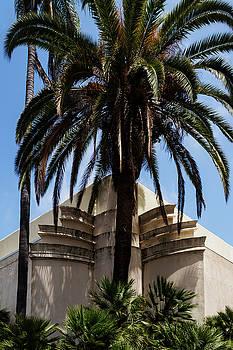 Guy Shultz - Deco Palm