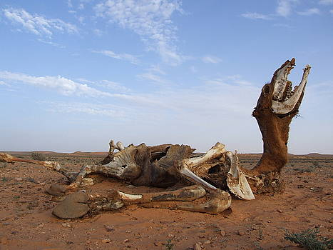 Decomposing Camel in Sahara by Bill Vernon
