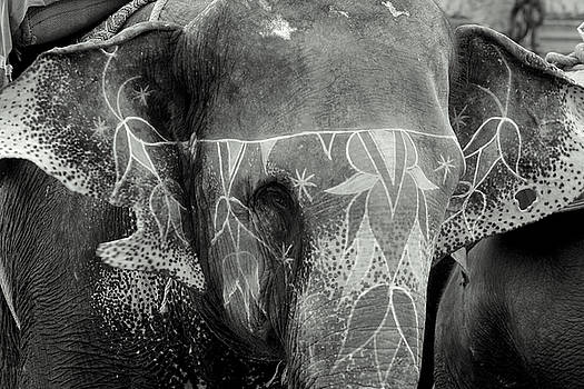 Decorated Elephant by Karan Anand