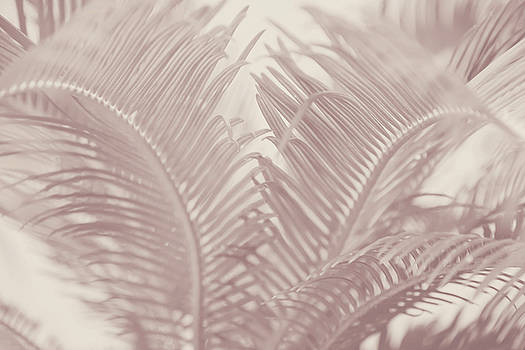 Decorative Ferns by Toni Hopper