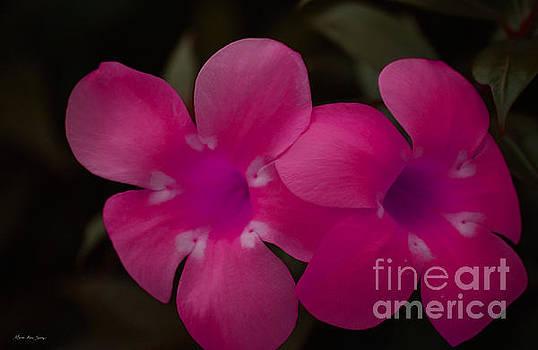 Decorative Floral A62917 by Mas Art Studio