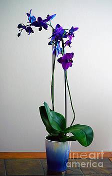 Decorative Orchid Photo A6517 by Mas Art Studio