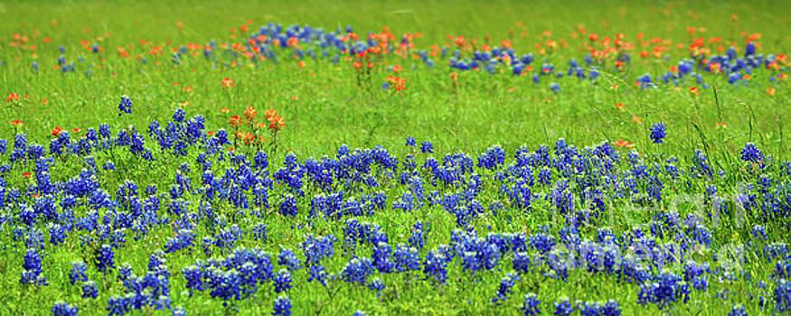 Decorative Texas Bluebonnet Meadow Photo A32517 by Mas Art Studio