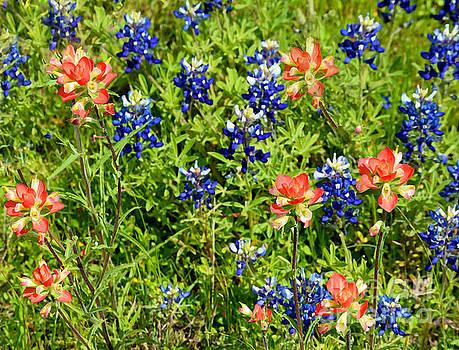 Decorative Texas Bluebonnets Meadow Digital Photo G33117 by Mas Art Studio