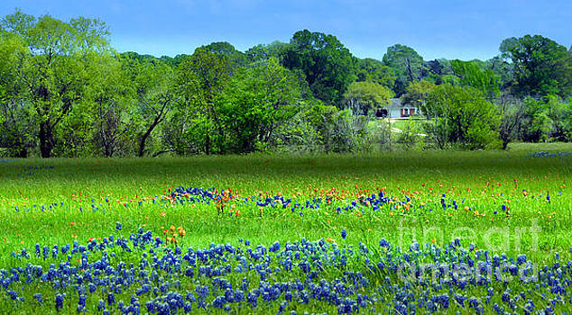Decorative Texas Homestead Bluebonnets Meadow Mixed Media Photo H32517 by Mas Art Studio