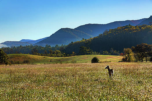 Deear and Mountains Cades Cove Smoky Mountains Tennessee by Carol Mellema