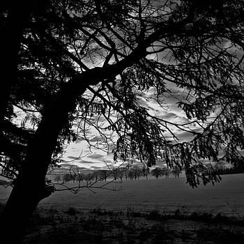 Deep black tree art photo by Roman Aj