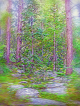 Deep Forest Discoveries by Joel Bruce Wallach