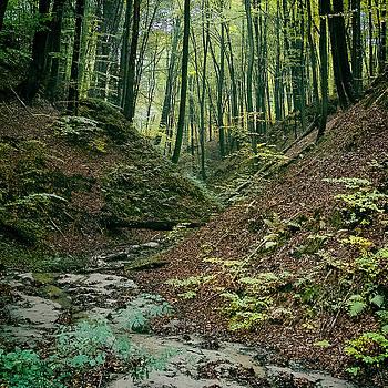 Deep Forest. Krekhiv, 2011. by Andriy Maykovskyi