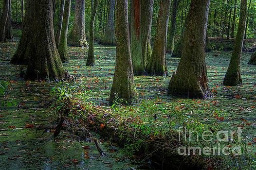 Larry Braun - Deep in the Swamp
