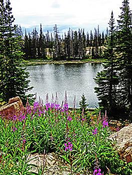 Deep Pink Flowers on Lake Catherine Utah by Alan Socolik