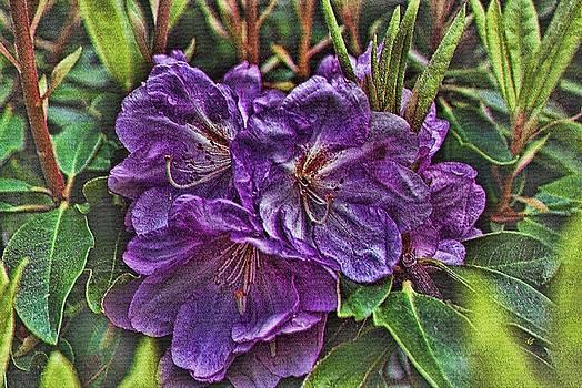 Deep Purple by John Winner