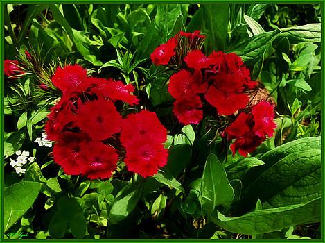 Deep Red Dianthus by Debra Lynch