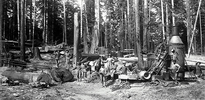Daniel Hagerman - DEEP REDWOOD FOREST LOGGING c. 1892