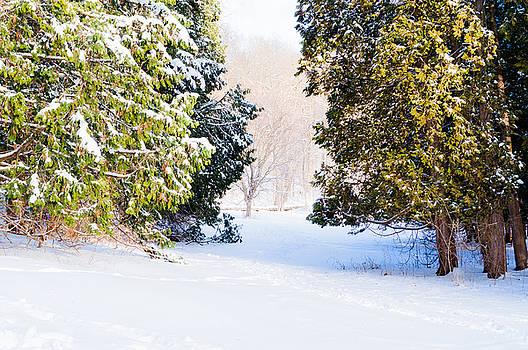 Deep Snow 4 by Stephen Thompson