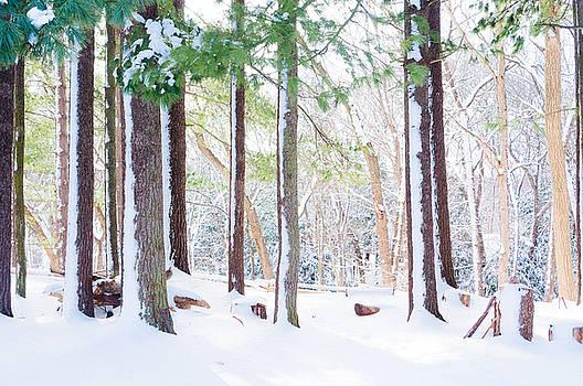 Deep Snow 5 by Stephen Thompson
