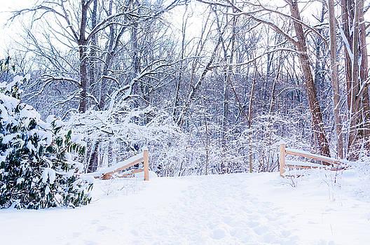 Deep Snow 3 by Stephen Thompson