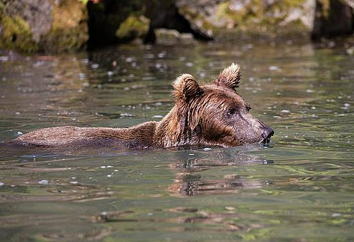 Gloria Anderson - Deep swimming bear