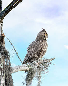 Deep Thoughts of the Great Horned Owl by Mark Andrew Thomas
