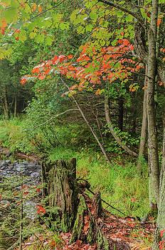 Deep Woods Fall by Thomas Pettengill