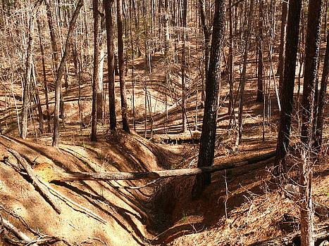 Deep Woods by Robert Brown