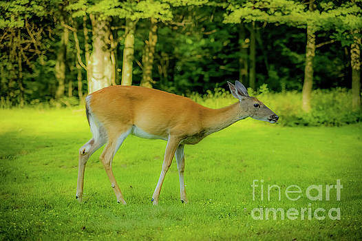 Deer 1440G by Doug Berry