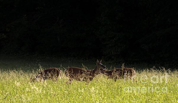Deer and Breakfast. by Itai Minovitz