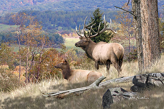 Deer Art - Return of the Mighty Elk by Dale Kunkel Art