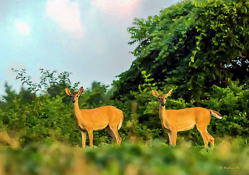 Deer At Evening Light by Brian Wallace