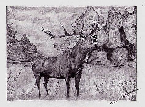 Deer by Batki Noemi