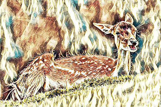 Deer Fawn by Lita Kelley