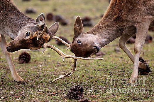 Deer Games by Kathy Eastmond