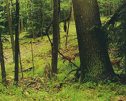 Darlene Bell - Deer In Forest
