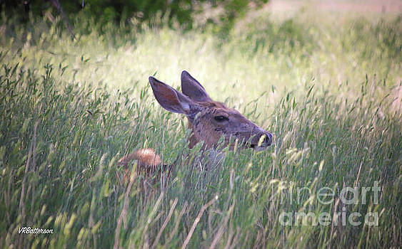 Deer in Grass Two by Veronica Batterson