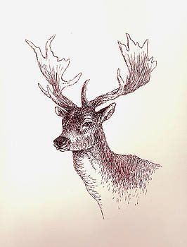 Deer In Ink by Michael Vigliotti