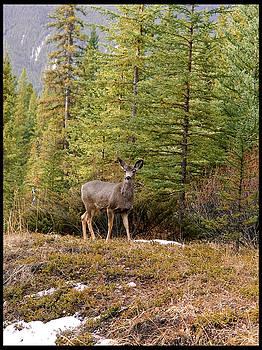 Elisabeth Dubois - Deer in the wild 2
