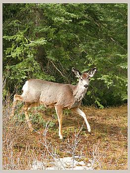 Elisabeth Dubois - Deer in the wild 3