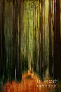 Deer In The Woods by K Hines